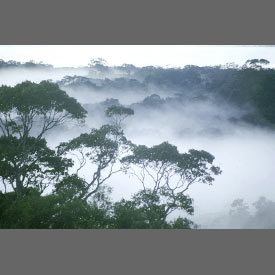 rainforest in central amazonia