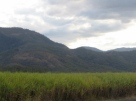 Sugarcane field Queensland Australia Copyright Renate Leahy 2004