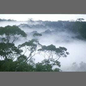 2_4amazon_forest.jpg