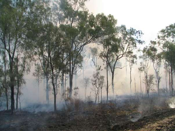 brushfire-oz-2004-copyright-renate-leahy.jpg