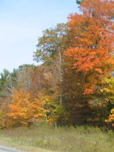 fall-colours-lakeridge-06.jpg