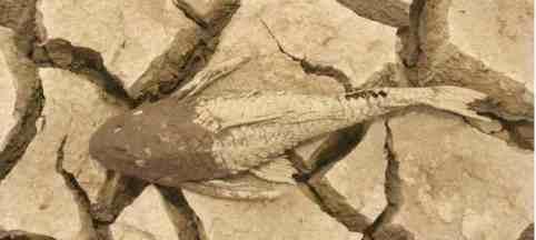 07102005-dry-mud-fish-manaquiri-amazonas-state-greenpeace.jpg