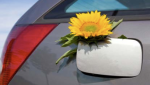 flower-in-gas-tank