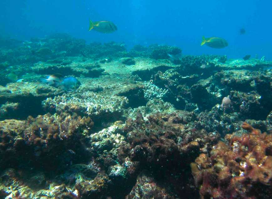 severely-degraded-reef-flat-at-kelso-reef-great-barrier-reef ...