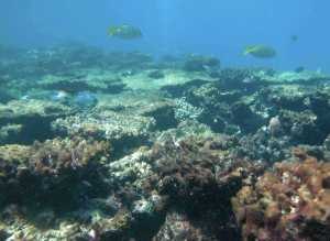 severely-degraded-reef-flat-at-kelso-reef-great-barrier-reef-australiaimage-c2a9-cathie-page-very-sml2