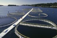 salmon_farms