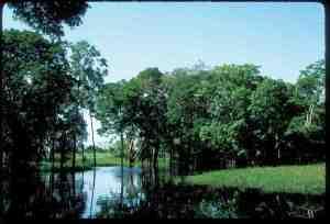 Flooded forest near Careiro Island, Central Amazonia sml [Image courtesy of Cristina Cox FernandesHR