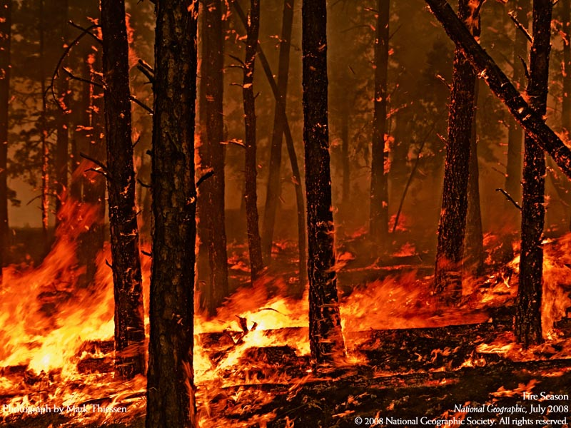 http://stephenleahy.files.wordpress.com/2009/10/forest-fire.jpg