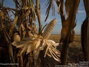 maize - mexico