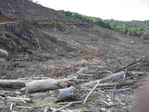 south africa plantation clearcut -- wally m