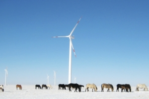 windmill winter ponies