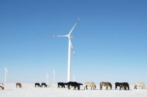 windmill winter ponies