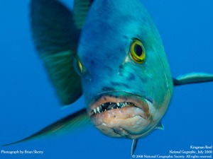 red snapper -- reef fish w teeth