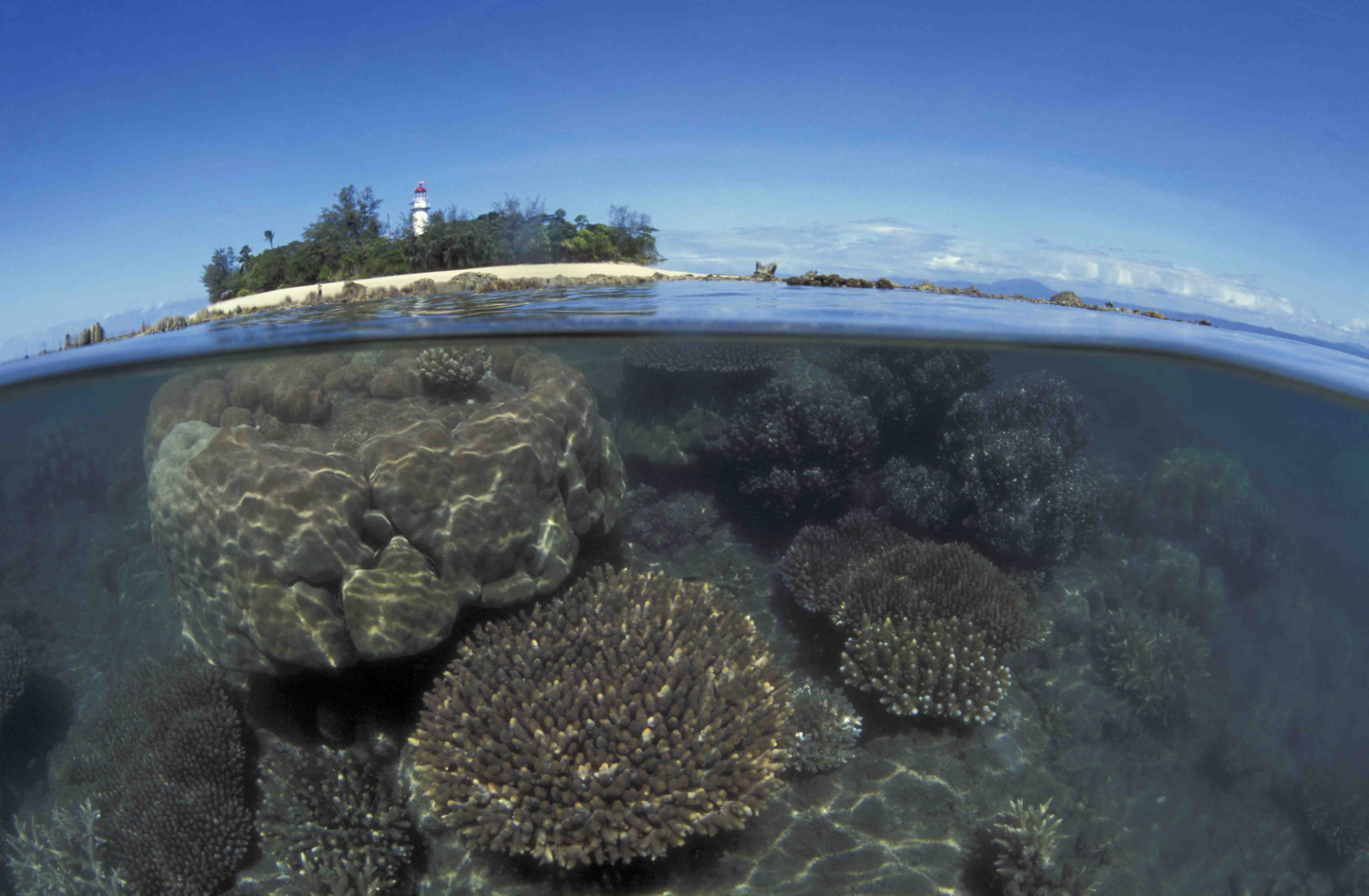 Reducing Fossil Fuel Use Only Way to Save Dying Corals