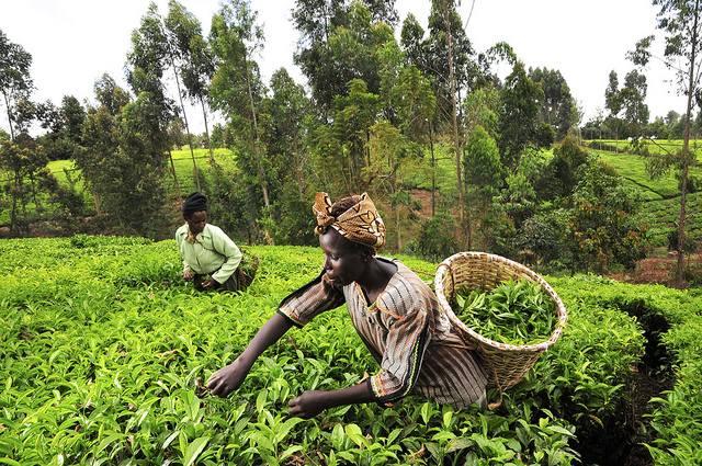 Kenya green hills CIAT Neil Palmer sml