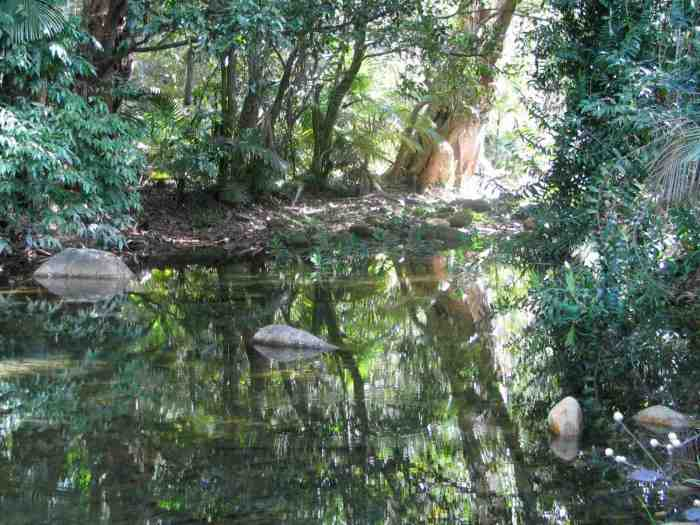 Pool of water in oz forest rslpix