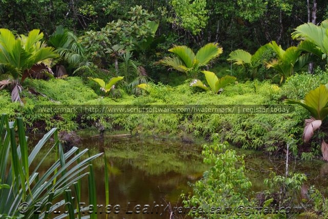 Wetlands regulate, clean and cool water. Mare Aux Cochons high-altitude wetlands, Seychelles Islands (ReneeLeahy copyright)