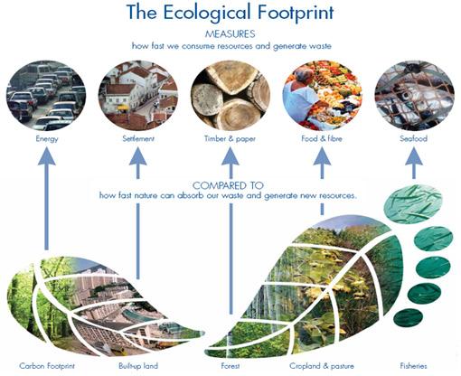 footprint basics-overview-510